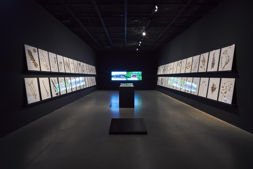 """An installation view of Na Hyun's """"Plants Collection"""" (2015) and two video works titled, """"Suninmun"""" (2019) and """"Whankyung Chen"""" (2019)"""
