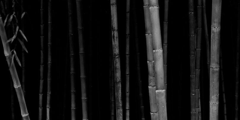 Choi Byung-Kwan, <Bamboo Panorama 01>, 2002. ⓒChoi Byung-Kwan